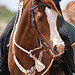 Looking for a horse.... - last post by jillian prince