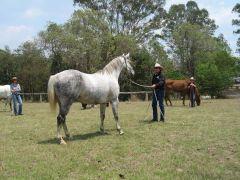 Gympie QLD, RFT Clinic Nov 2009