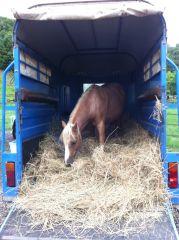 Rupert helps unload the hay