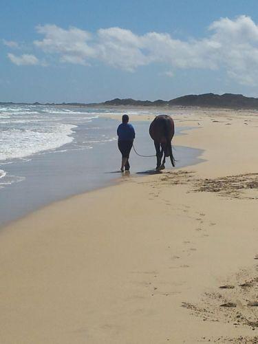 Just Wandering along the Sea Shore