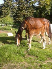 Roxi & Elana (one of Gundor's Babys)