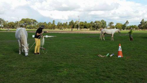 Ranch Rope ponderings...?