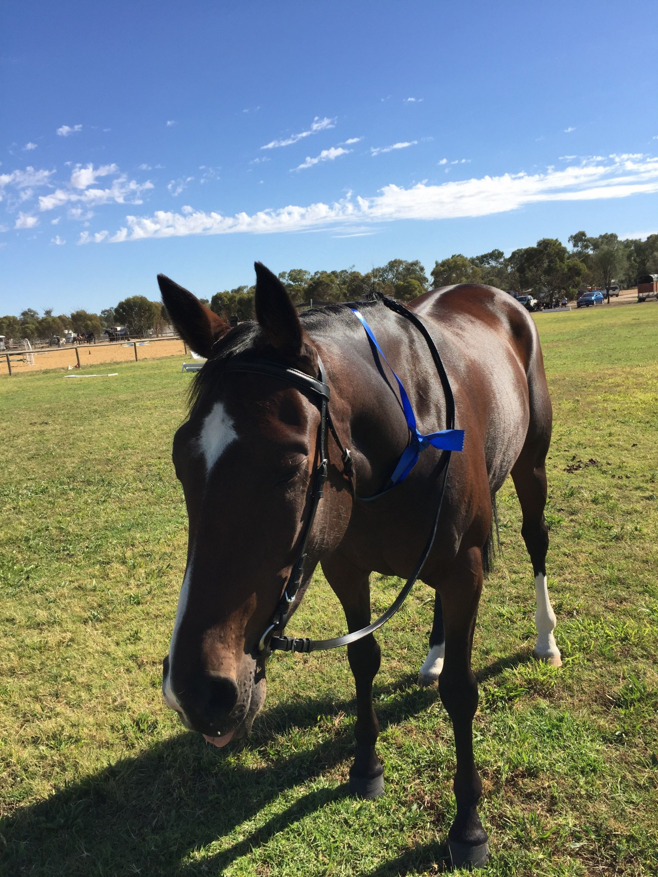 Sonia Horse Complex 1st Led Standy Mare 18/3/17