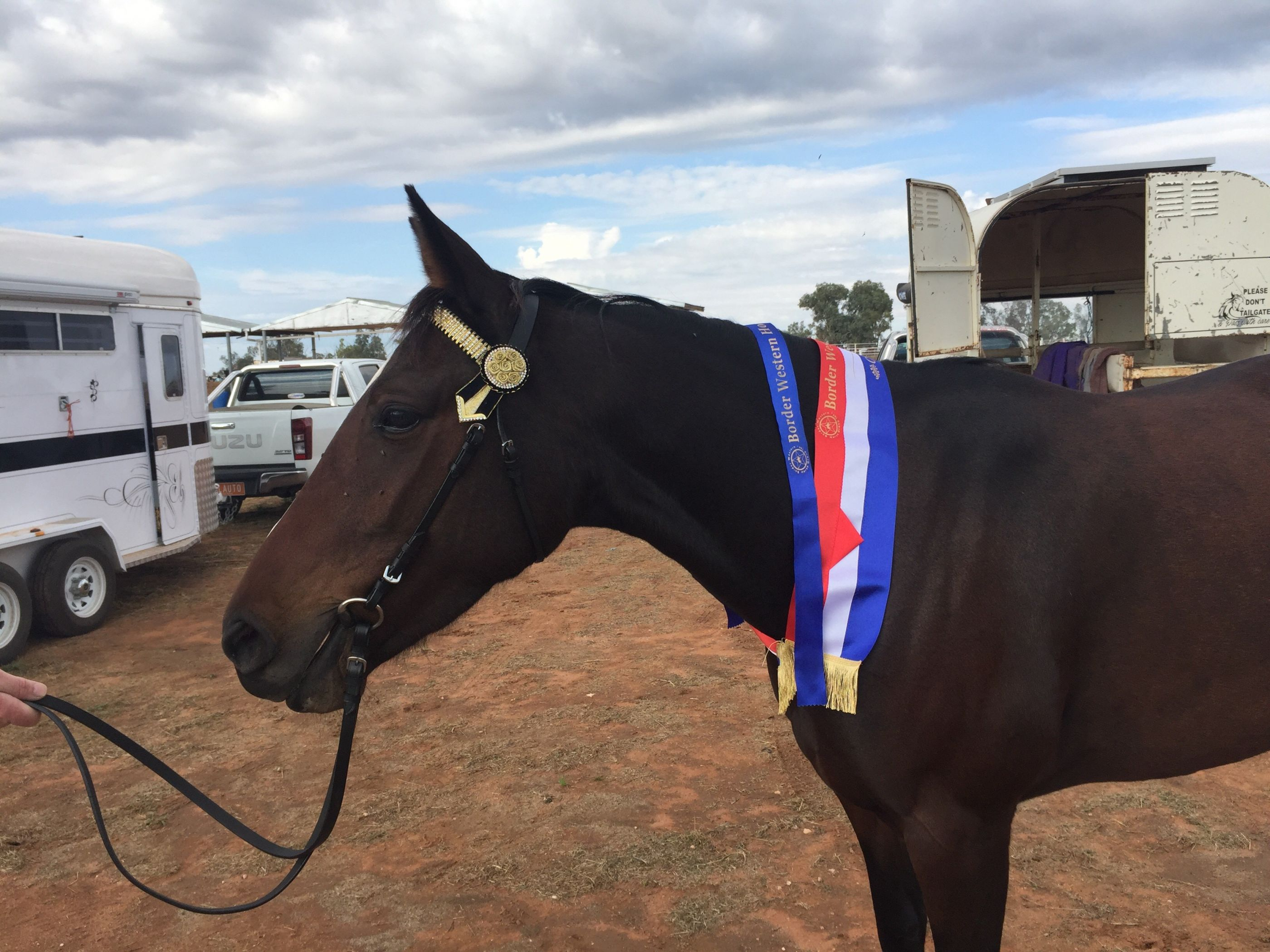 Saint Sonia 1st  Led Standardbred Mare and then Champion Led Standardbred -  Border Western Horse Club B Show 23/4/17