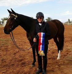 Saint Sonia Champion Led Standardbred Border Western Horse Club B Show 23/4/17