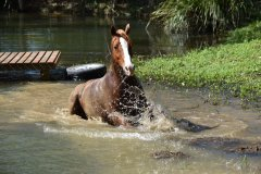 Darcy Splashing
