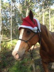 Christmas Darcy