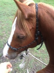 Riding in our hackamore