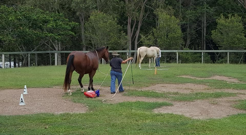 100 Things to do with your Horse (5).jpg