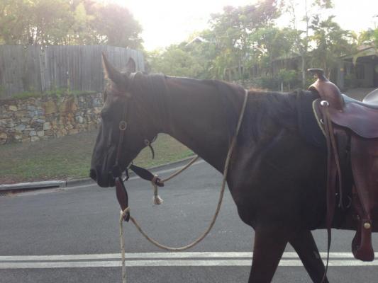 horses 010.JPG