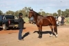 QS Horses For Sale - last post by cass