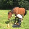 My horse walks off - last post by juliaparqui2000