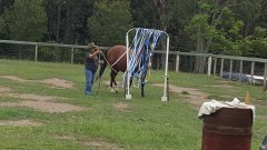 100 things to do with your horse.jpg